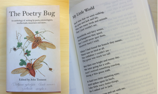 My Little World in The Poetry Bug