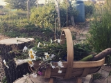My allotment andCovid-19